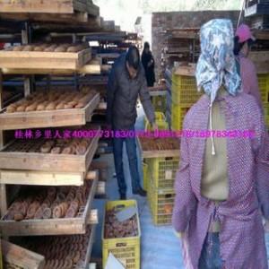供应批发散装广西桂林土特产恭城柿饼中饼