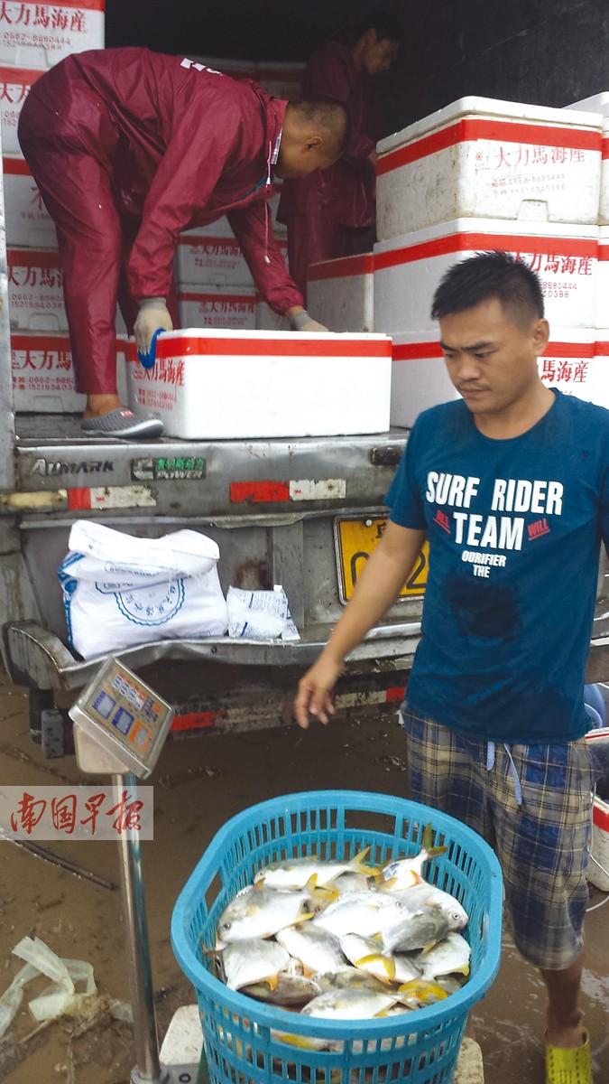 钦州3400吨金鲳鱼暴毙 连日暴雨渔民损失惨重(图)